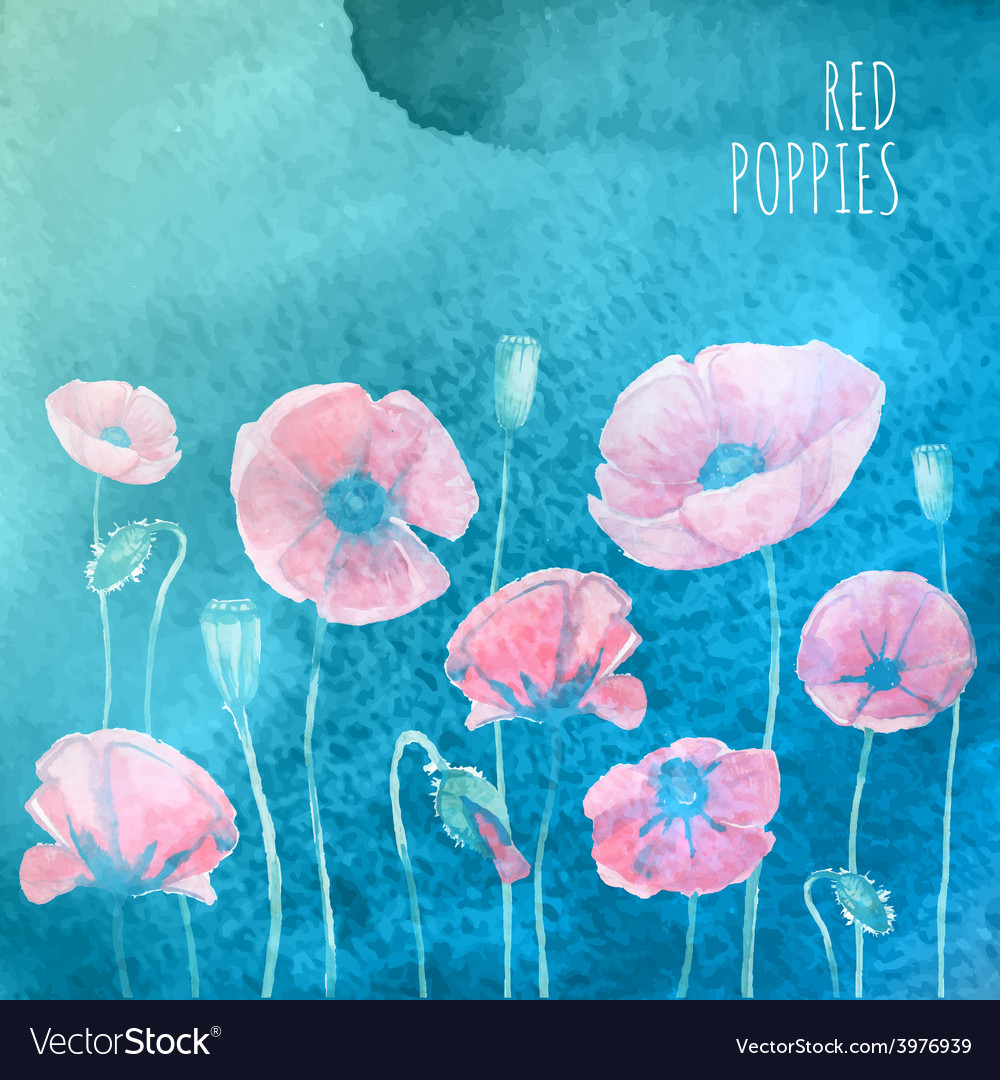 Waterolor red poppies on blue background vector | Price: 1 Credit (USD $1)