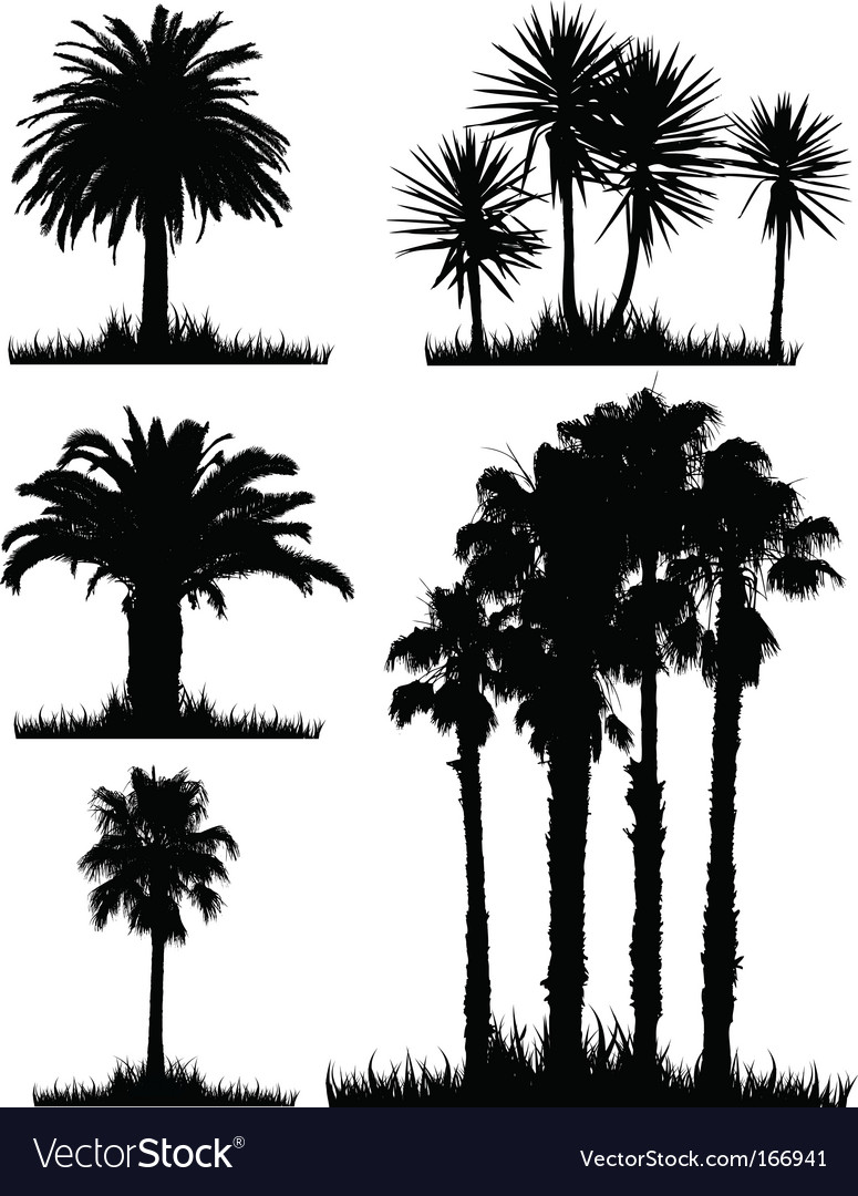 Tropical trees vector | Price: 1 Credit (USD $1)