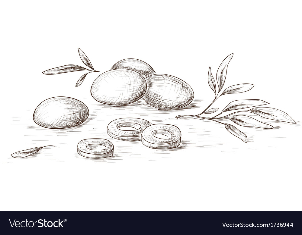 Hand drawn olives vector | Price: 1 Credit (USD $1)