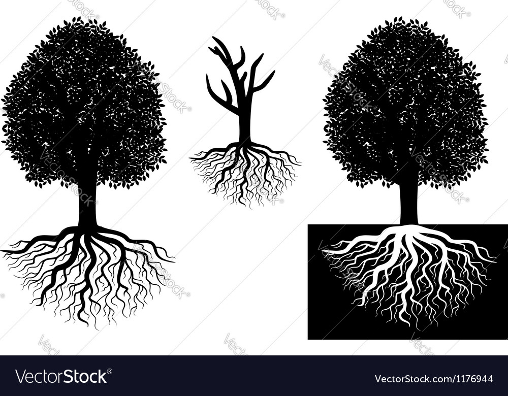 Isolated tree with roots vector | Price: 1 Credit (USD $1)