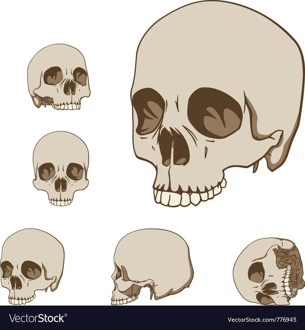 Human skulls set vector | Price: 1 Credit (USD $1)