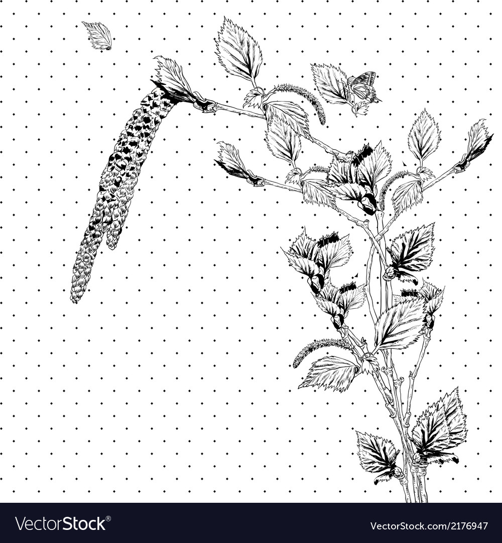 Vintage monochrome background with birch twigs vector | Price: 1 Credit (USD $1)