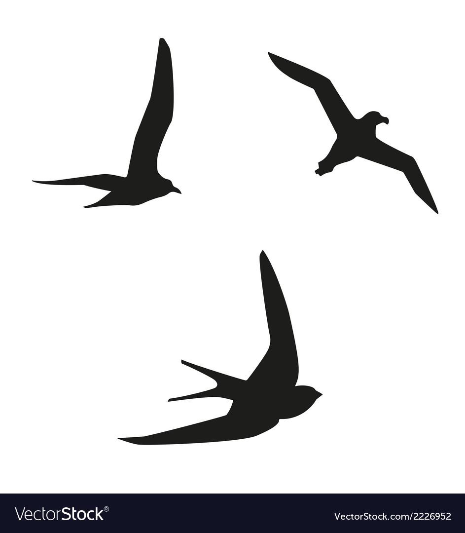 Sea birds vector | Price: 1 Credit (USD $1)