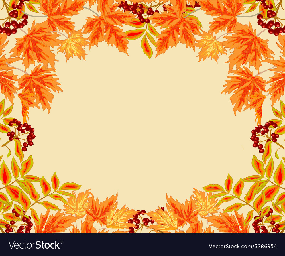 Frame from autumn leaves rowan berry and maple vector | Price: 1 Credit (USD $1)
