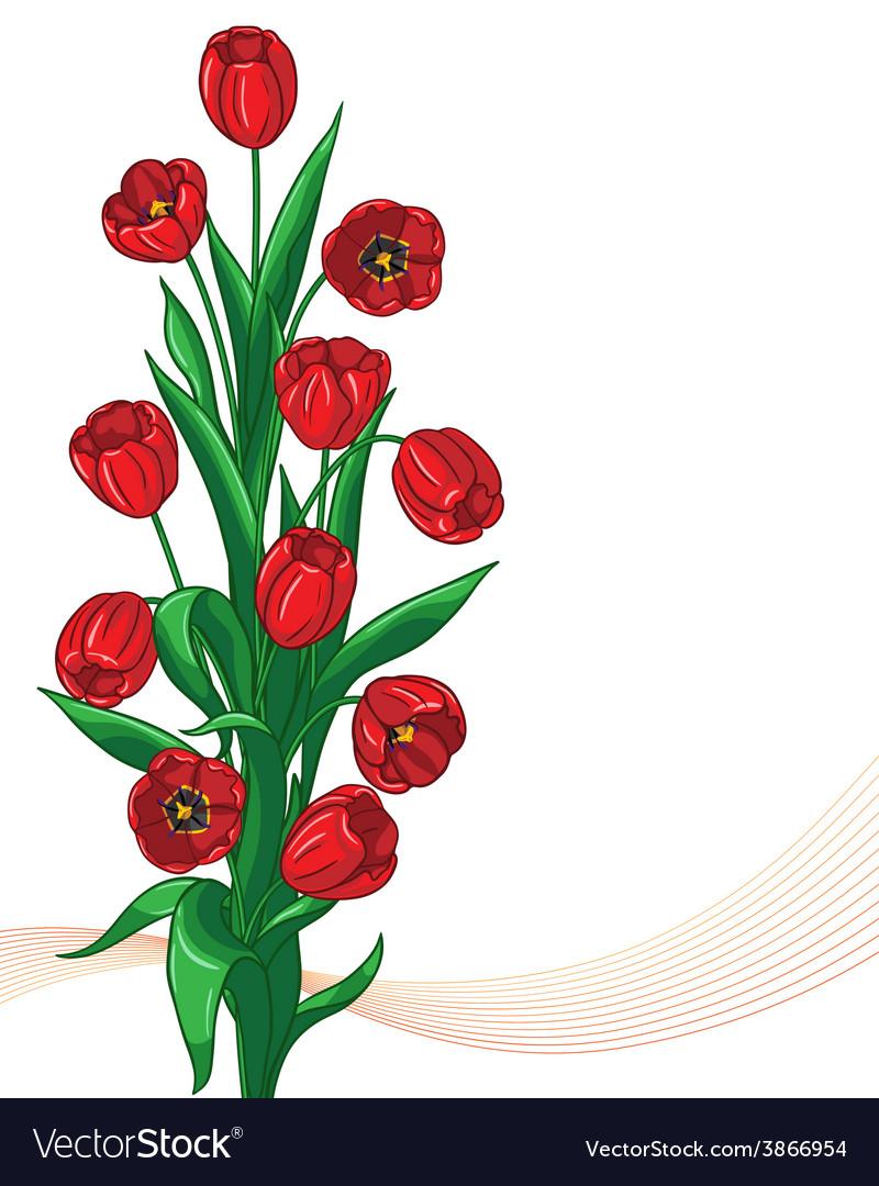 Red tulip bunch vector | Price: 1 Credit (USD $1)