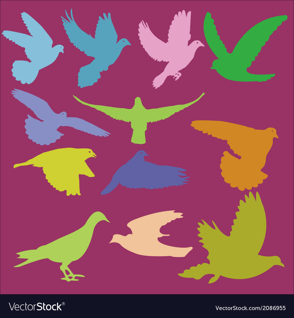 Pigeon 2 vector | Price: 1 Credit (USD $1)