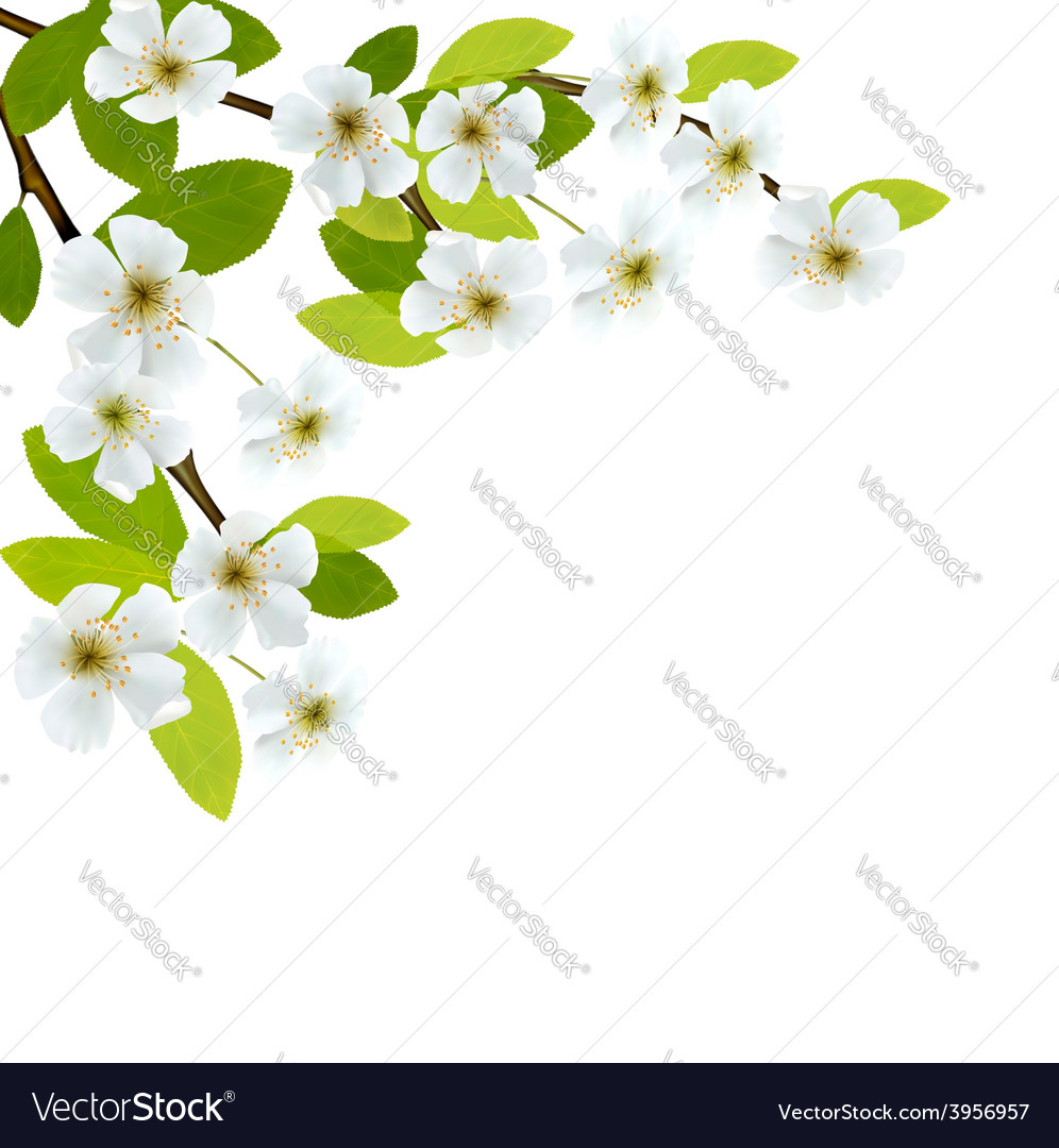 Blossoming tree brunch with spring flowers vector | Price: 3 Credit (USD $3)