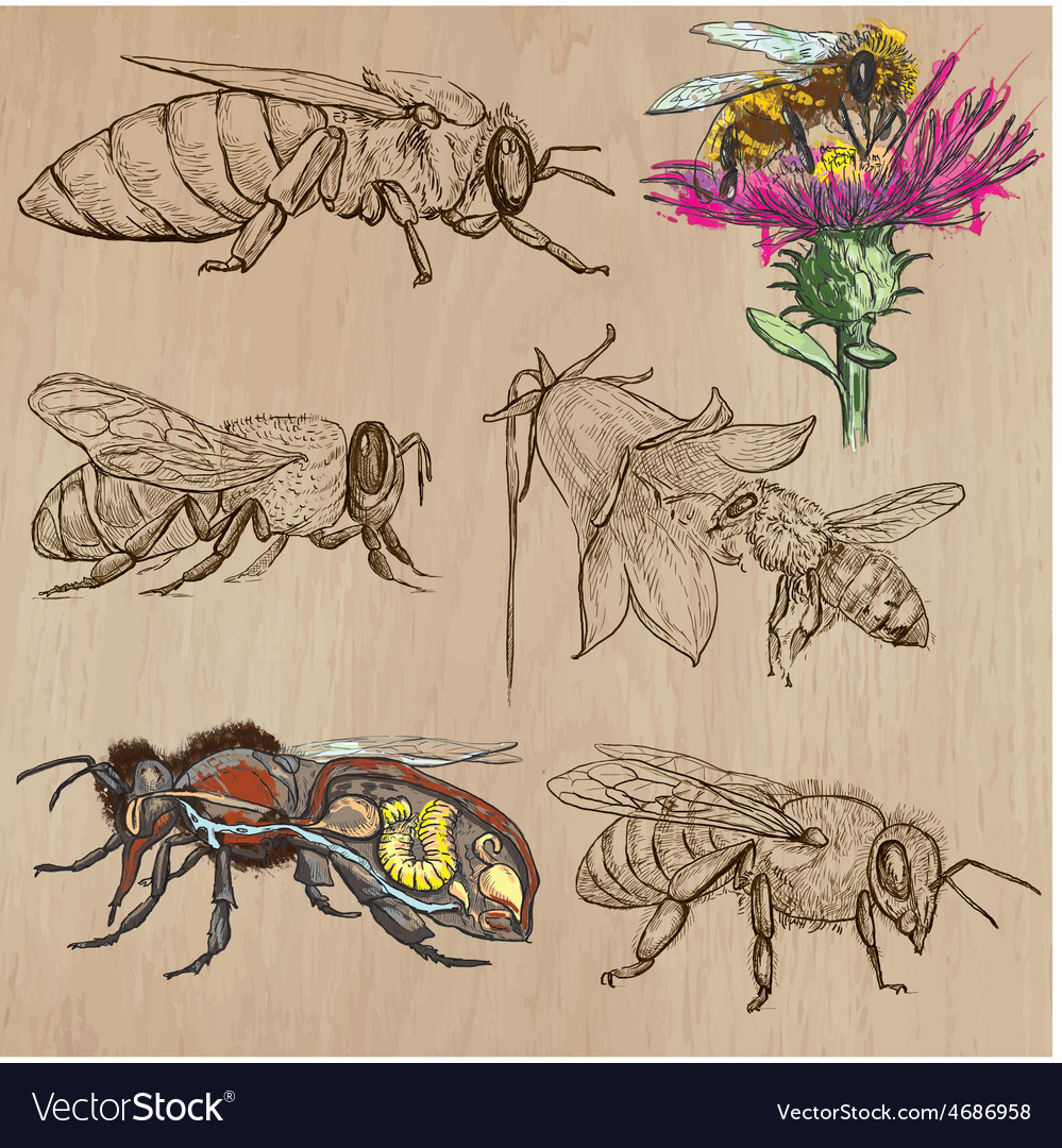 Bees beekeeping and honey - hand drawn pack 2 vector | Price: 3 Credit (USD $3)
