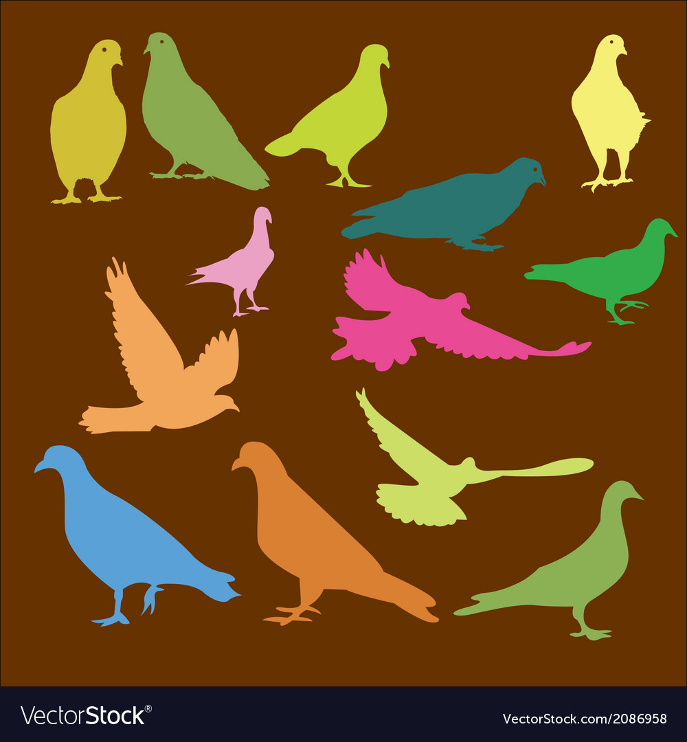 Pigeon 3 vector | Price: 1 Credit (USD $1)