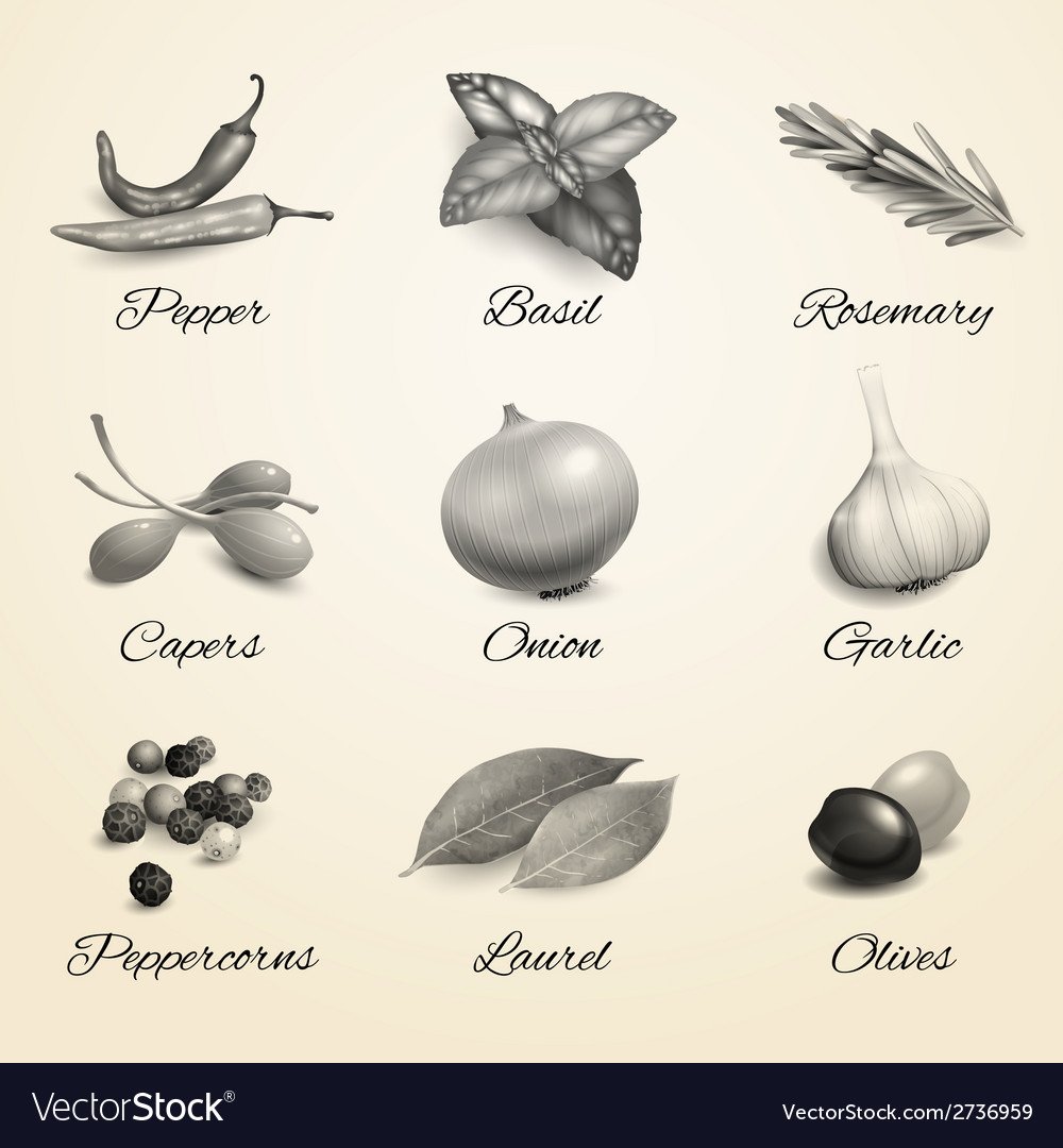 Herbs and spices black and white set vector | Price: 1 Credit (USD $1)