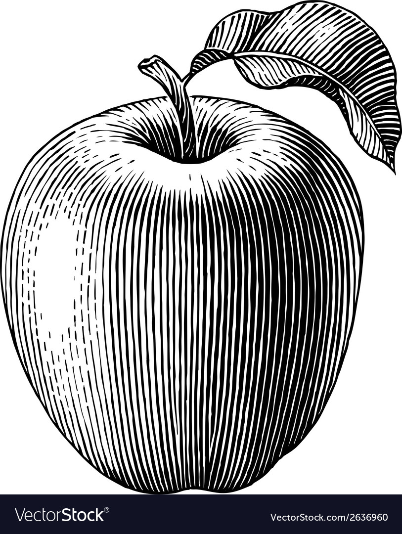 Engraved apple vector | Price: 1 Credit (USD $1)