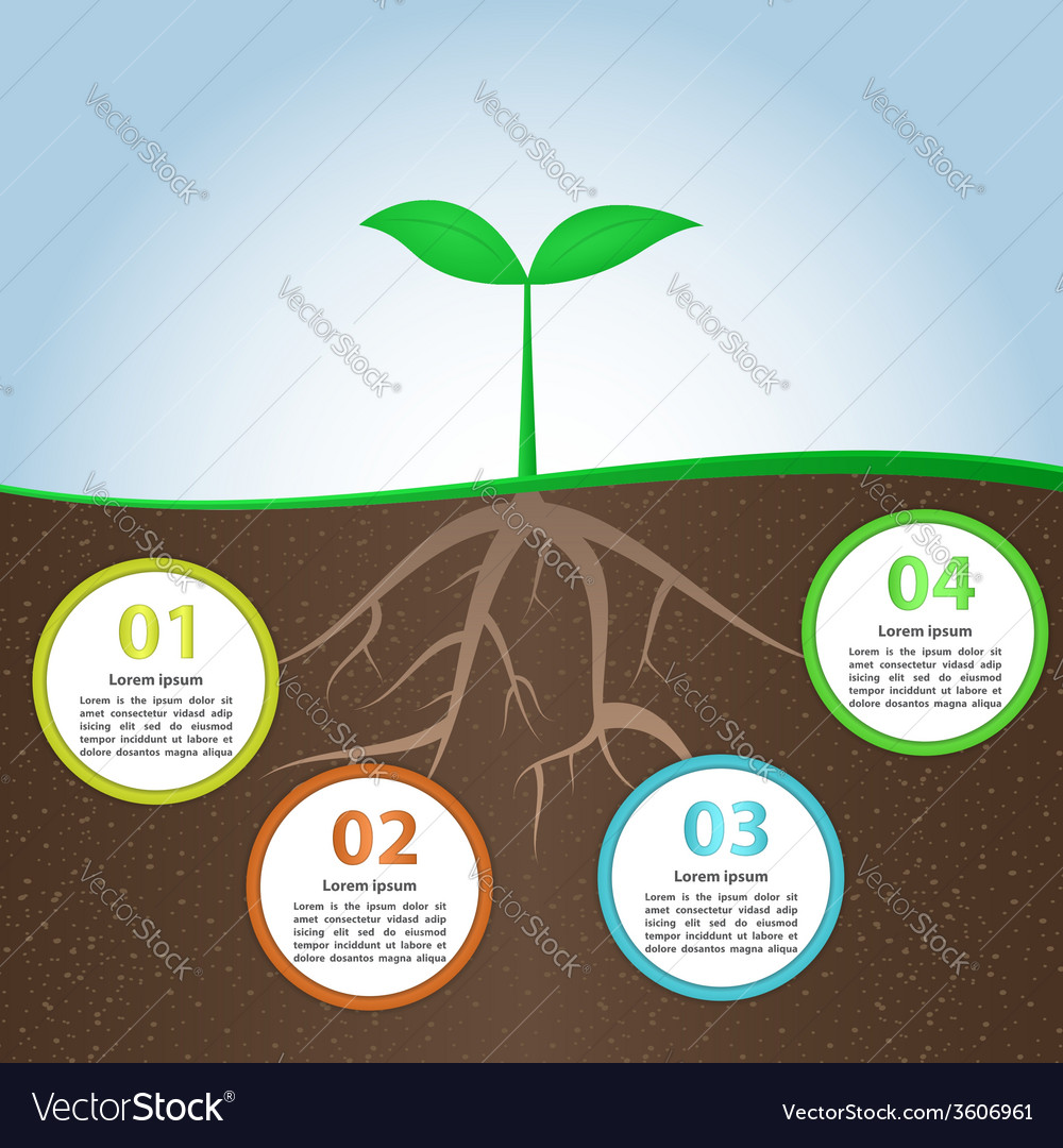 Plant and root infographic background design templ vector | Price: 1 Credit (USD $1)