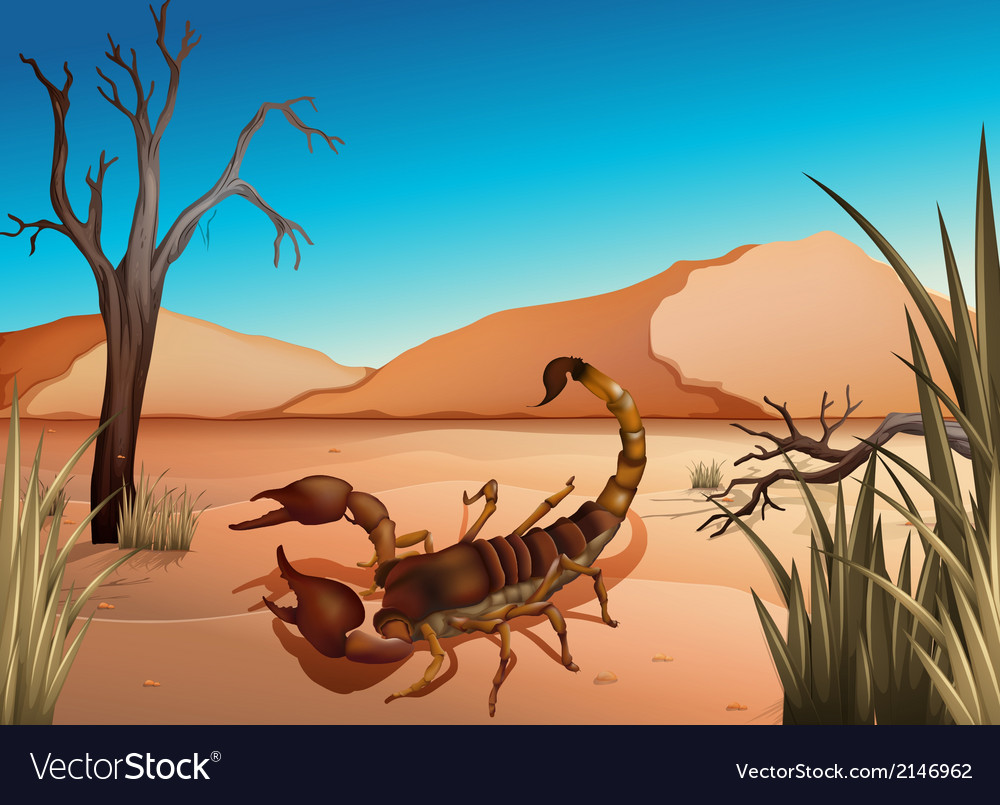 A desert with a scorpion vector | Price: 1 Credit (USD $1)