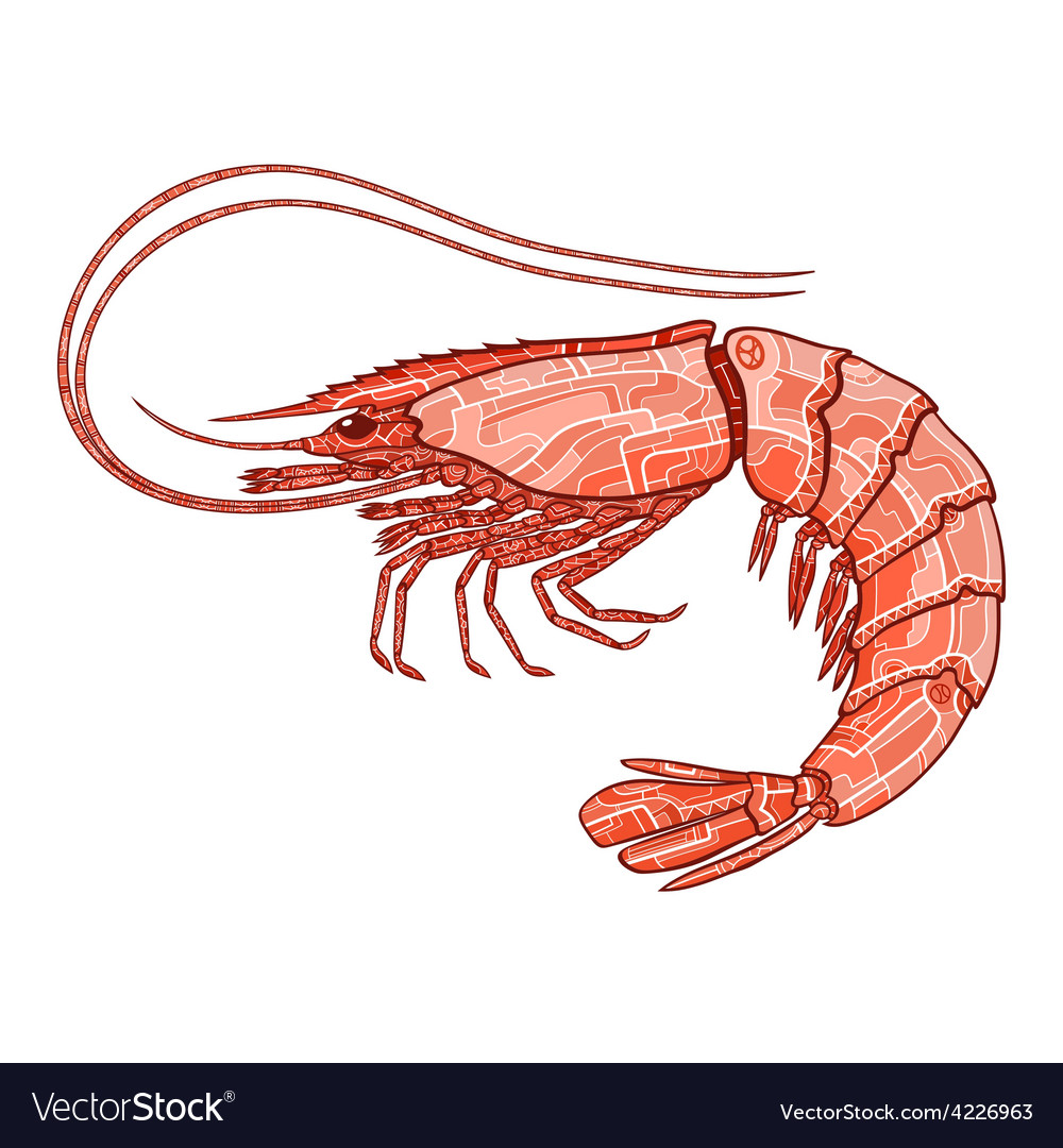 Decorative isolated shrimp vector   Price: 1 Credit (USD $1)
