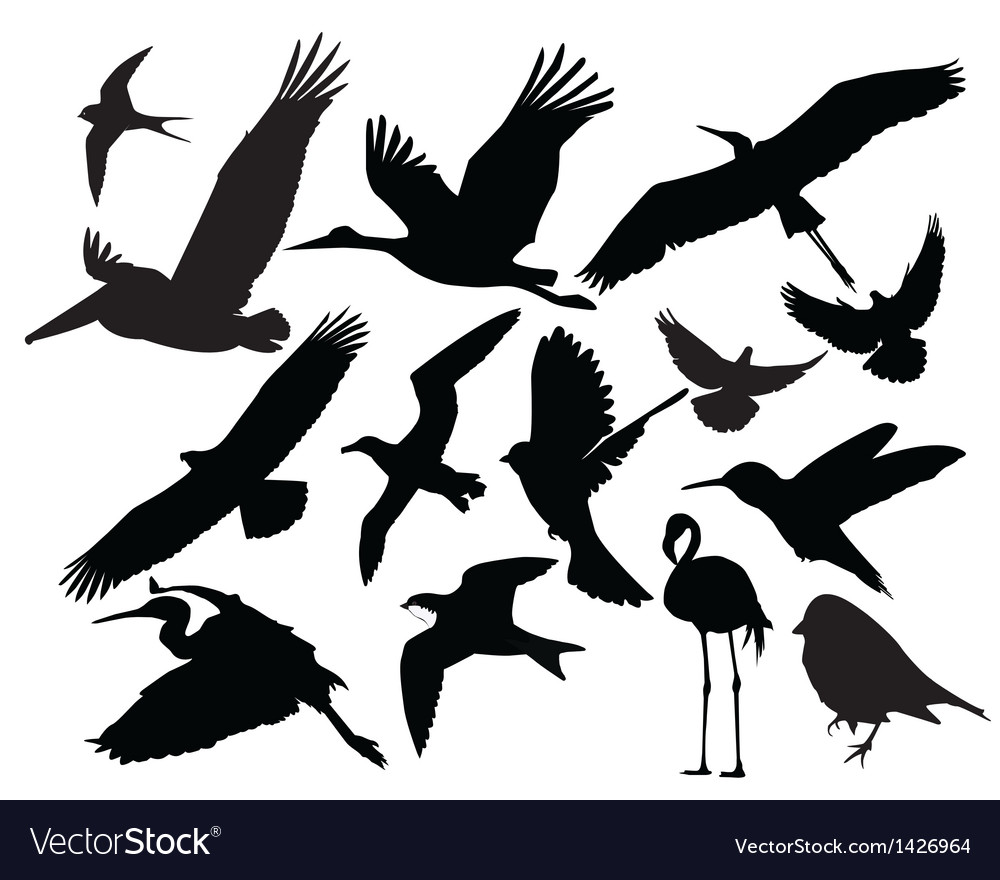 Bird wildlife vector | Price: 1 Credit (USD $1)