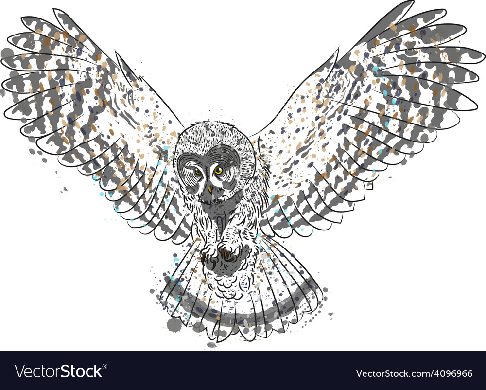 Hunting owl vector   Price: 1 Credit (USD $1)