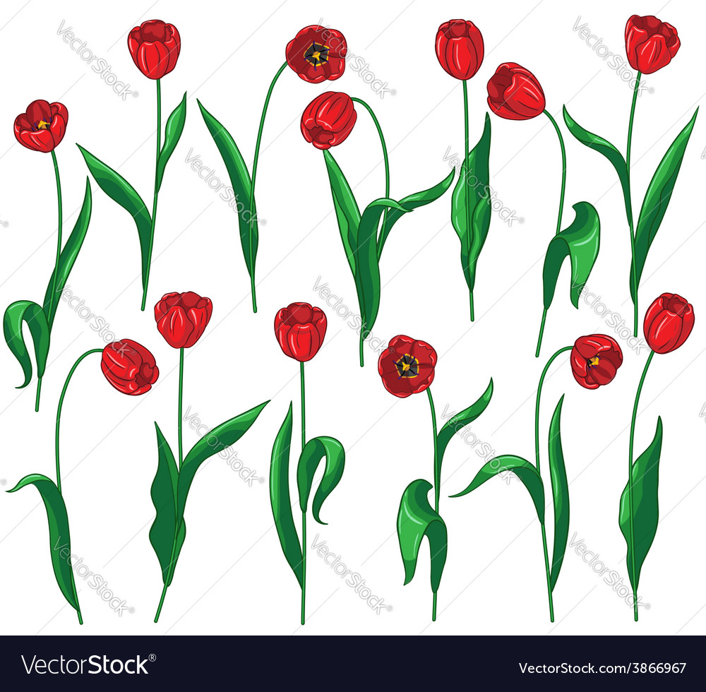 Red tulip set vector | Price: 1 Credit (USD $1)