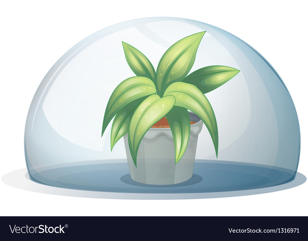 A plant in a pot inside a transparent arc vector | Price: 1 Credit (USD $1)