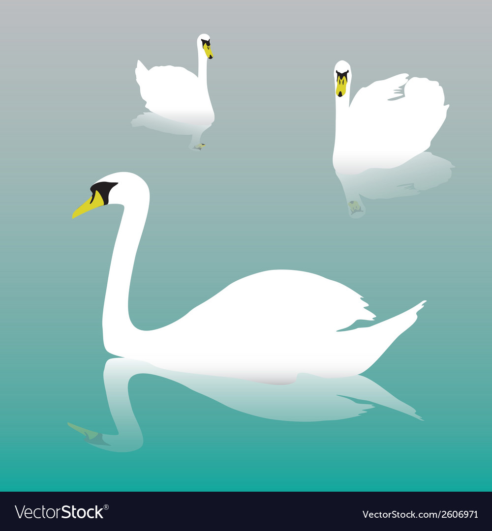 Swan on the watter eps10 vector | Price: 1 Credit (USD $1)