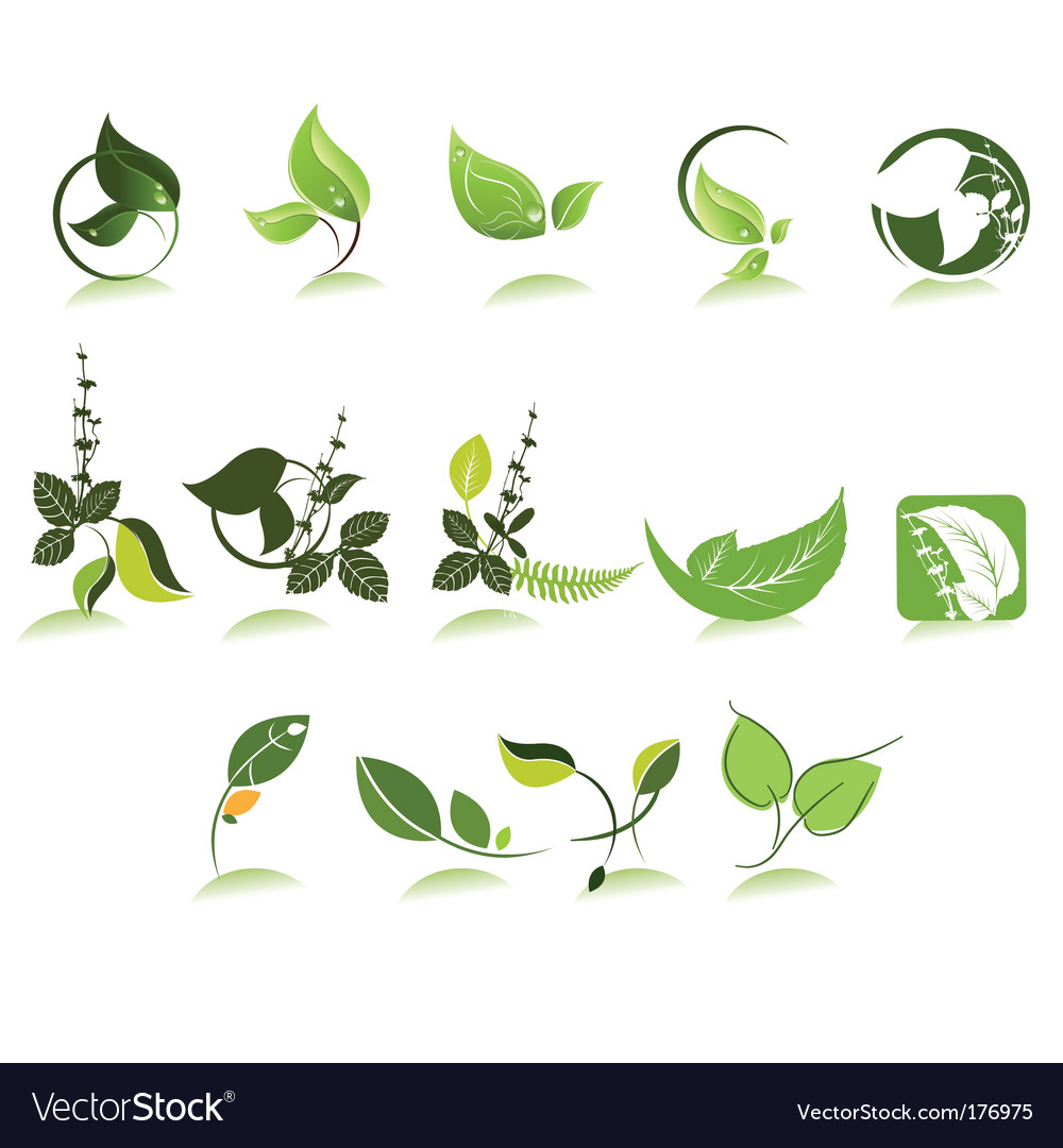 Herbal icons vector | Price: 1 Credit (USD $1)