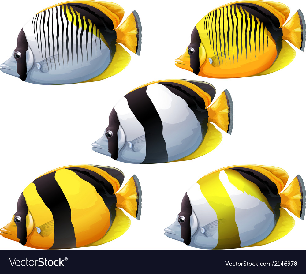Five colourful fishes vector | Price: 1 Credit (USD $1)