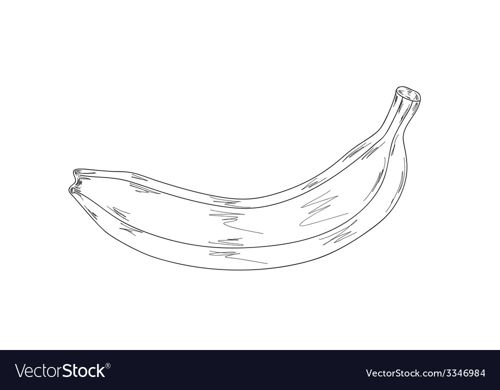 Banana sketch vector | Price: 1 Credit (USD $1)