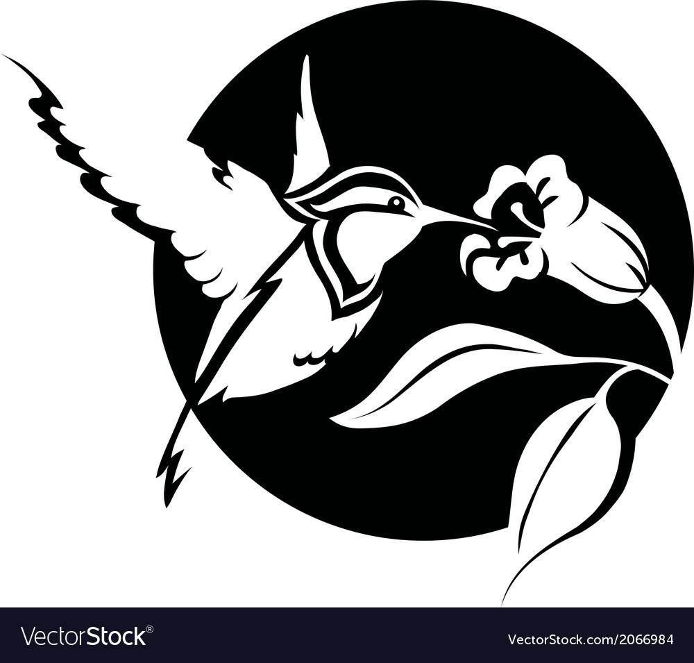 Colibri vector | Price: 1 Credit (USD $1)