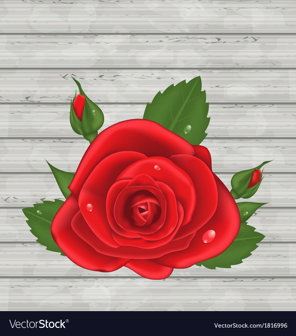 Close-up red rose for valentine day on wooden vector | Price: 1 Credit (USD $1)