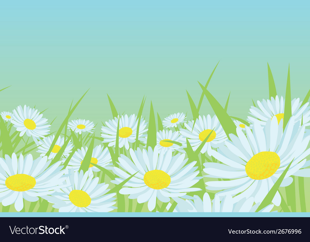 Daisy flower field vector | Price: 1 Credit (USD $1)