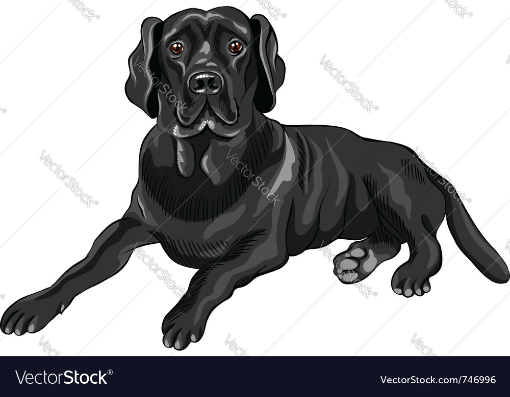 Serious dog breed vector | Price: 3 Credit (USD $3)