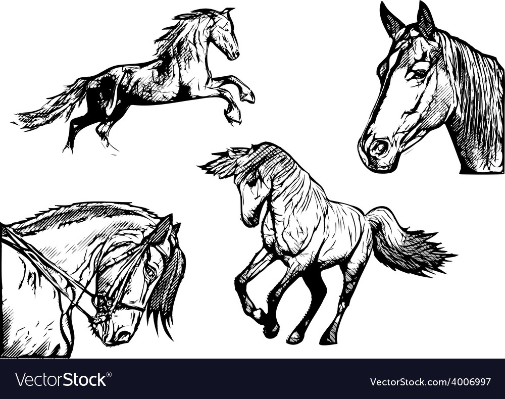 Horses vector | Price: 3 Credit (USD $3)