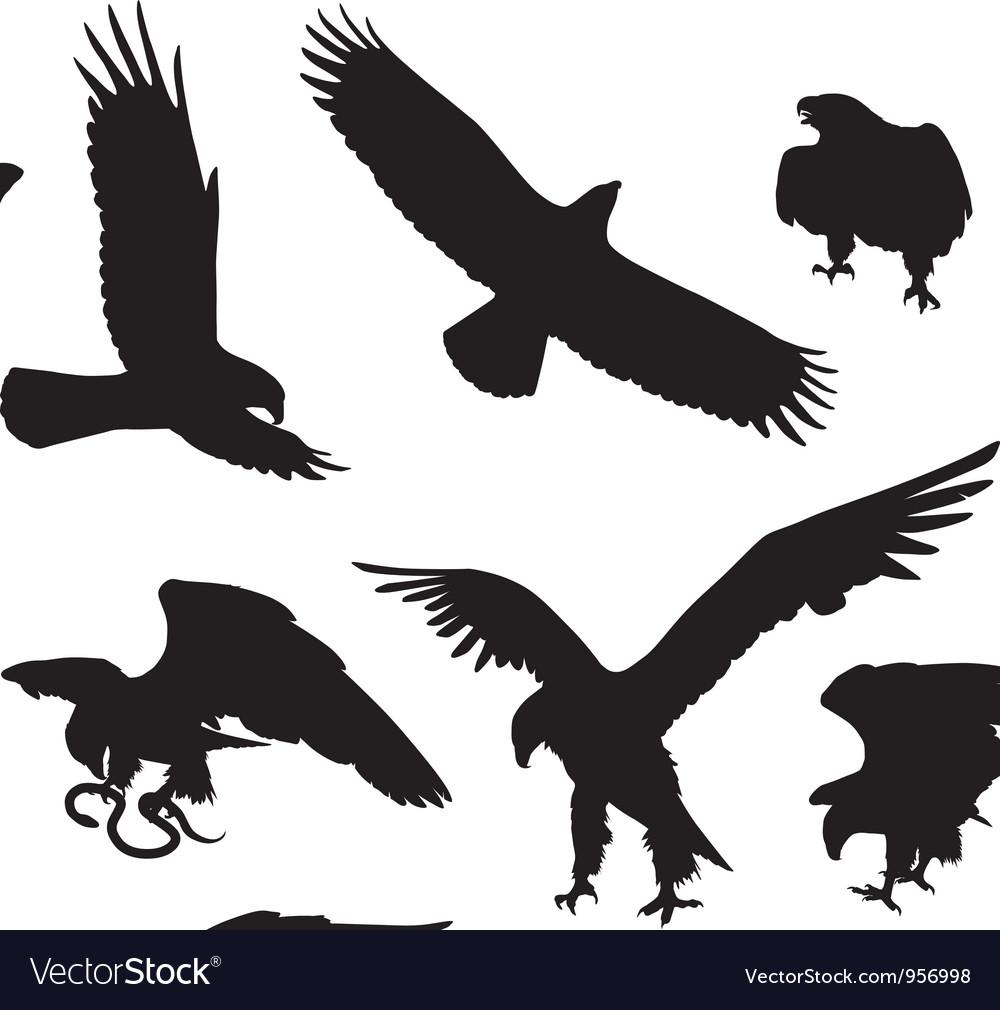 Eagles vector   Price: 1 Credit (USD $1)