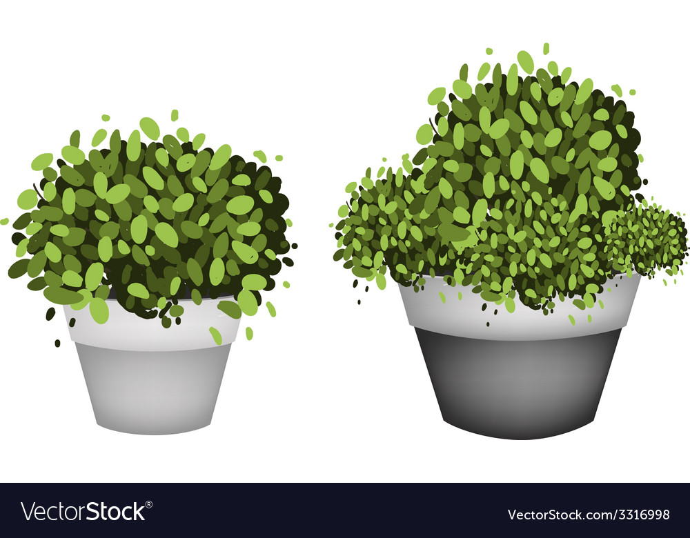 Green trees in terracotta flower pots vector | Price: 1 Credit (USD $1)
