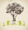 Olive tree hand drawn vector