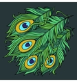 Peacock feathers vector