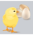 Small yellow chicken vector