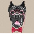 Hipster dog cane corso breed vector