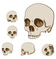 Human skulls set vector