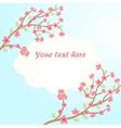 Sakura blossom card vector