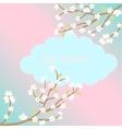 White sakura blossom card vector