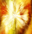 Flowerbright 1 vector