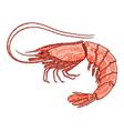 Decorative isolated shrimp vector