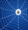 Spider and net vector