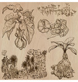 Flowers trees plants - hand drawn pack vector