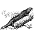 Tropical house gecko engraving vector