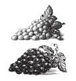 Grape logo design template grapevine or vector