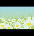 Daisy flower field vector