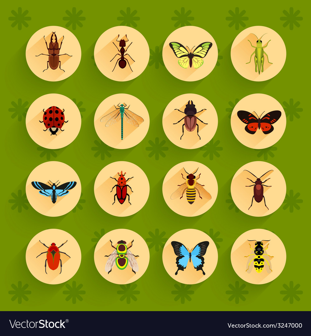 Insects flat icons set vector | Price: 1 Credit (USD $1)