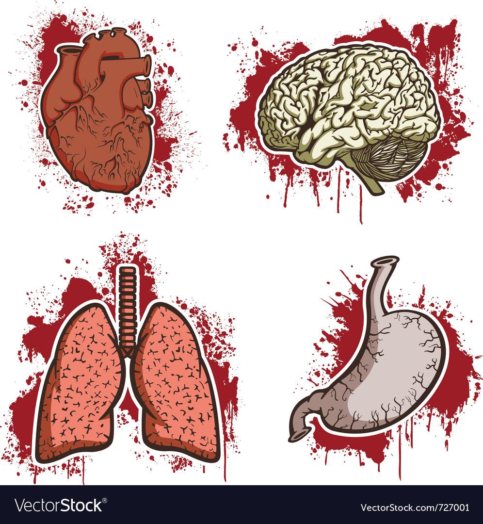 Cartoon human organs vector | Price: 1 Credit (USD $1)
