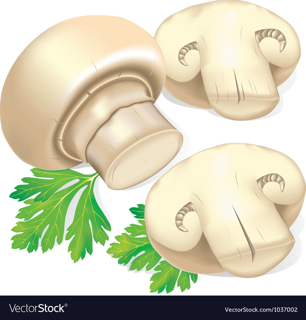 Field mushrooms and parsley vector | Price: 1 Credit (USD $1)